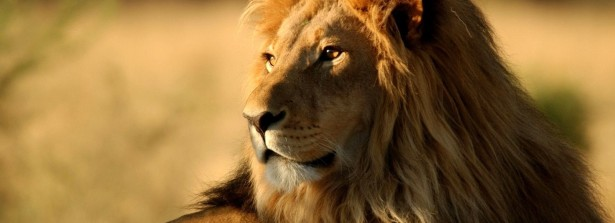 29 марта Семинар по Кундалини Йоге «Прими свой гнев – раскрой свою силу!»